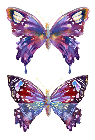 batterfly: Watercolor beautiful butterflies design. Butterfly isolated on white background. Hand painted with watercolor.