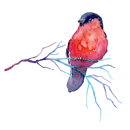 Hand drawn winter branch with a bird. Watercolor illustration of bullfinch sitting on the twig for card, poster or any other design.