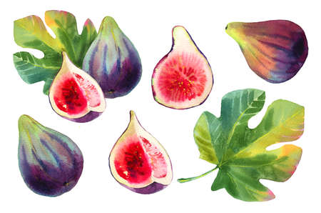 Set of hand drawn watercolour purple fig fruits and green leaves isolated on a white background. Illustration of bright, tasty and sweet fruits. Set of isolated botanical elements.