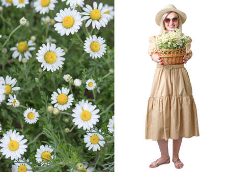 Beautiful woman in hat and with a basket of field daisies .Collage. Field camomiles