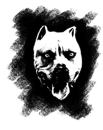 Black pitbull head on the white background.