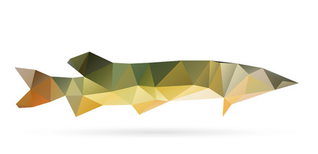 Polygon abstract illustration of pike Vector