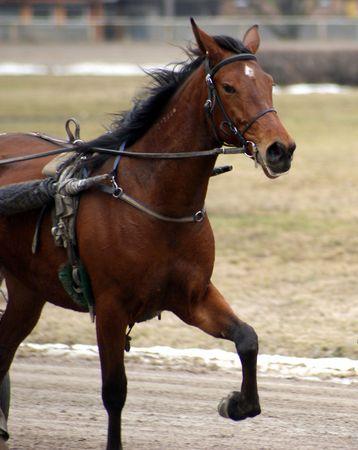 Pferd Lizenzfreie Bilder
