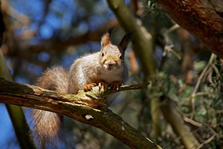 squirrel sits on a tree