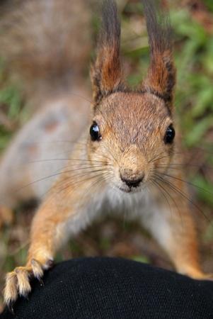 Eichh�rnchen gekommen ist, zu Fragen, Mahlzeit