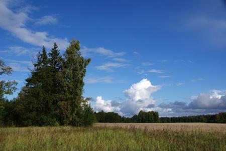L�ndliche Landschaft mit B�umen und den blauen Himmel