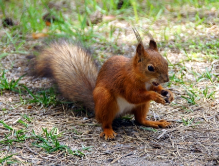 Squirrel eats a nut Stock Photo