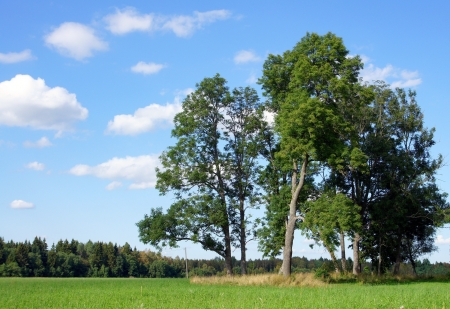 Landschaft mit einem Baum und der Himmel