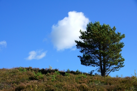 Perfect lone green tree against blue sky in a natural environment