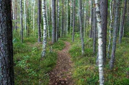 Gr�ner Weg im Wald zwischen den B�umen