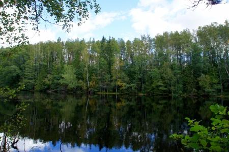 Gr�ner Wald und seine Spiegelung im Wasser