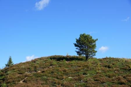 Perfekte einsamen gr�nen Baum gegen blauen Himmel in einer nat�rlichen Umgebung Lizenzfreie Bilder
