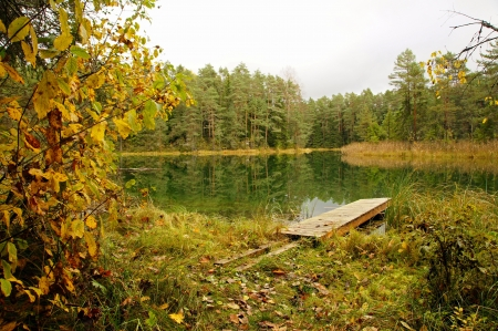 The small wooden bridge on a forests pond