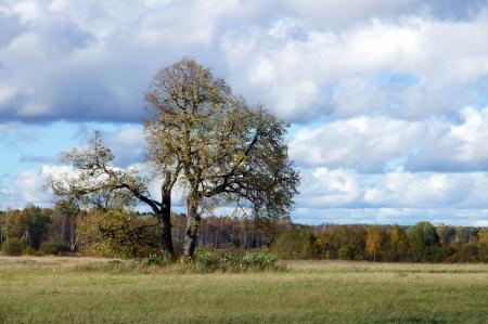 Baum gegen Himmel in einer nat�rlichen Umgebung