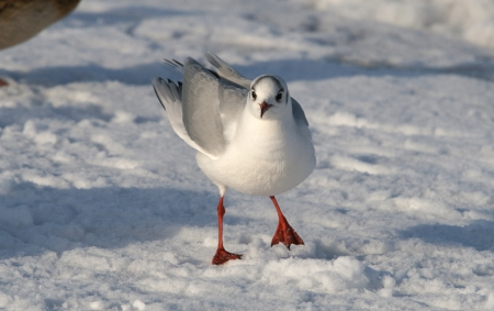 Seagulls on a background of the snow Stock Photo