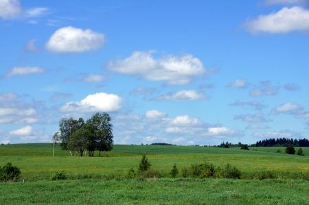 Landschaft mit den bew�lkten Himmel und Pflanzen