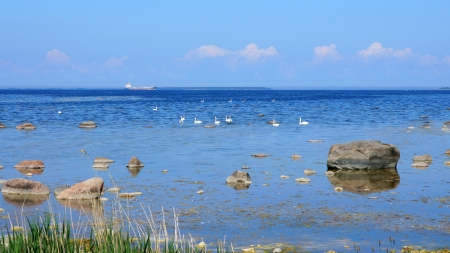 Swans on a background of the sea