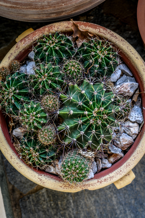 Overview of cactus plants in terracotta pot Imagens