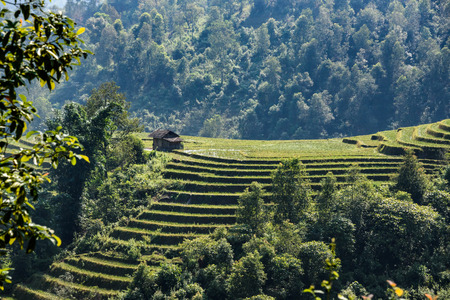 Rice fields in the mountains in Sapa Vietnam Imagens
