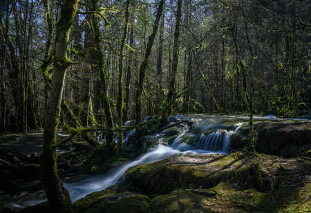 Long exposure of stream flowing through moss covered forest to waterfall