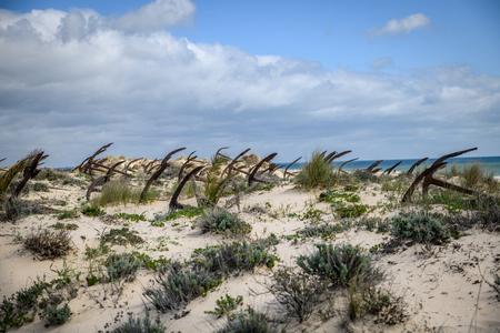 Barril Beach Tavira Portugal