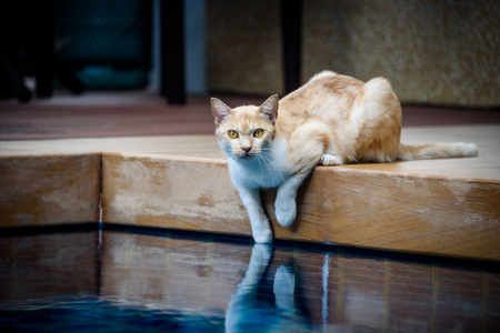 Orange cat dipping its paw in the pool.