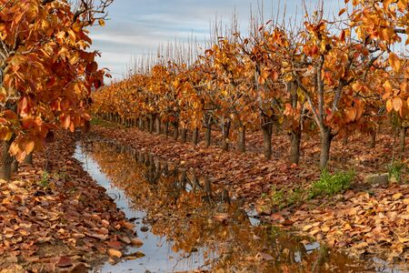 Fall foliage in an orchard