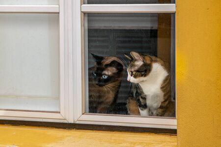 Curious cats looking out a house window Imagens