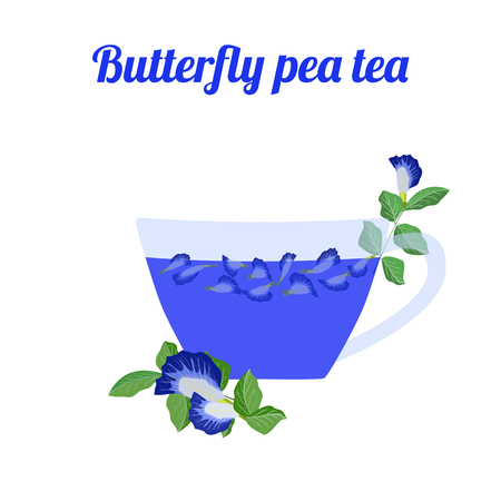 Butterfly pea tea in glass cup on white background. Concept for cocktail menu bar. Vector illustration in flat design.