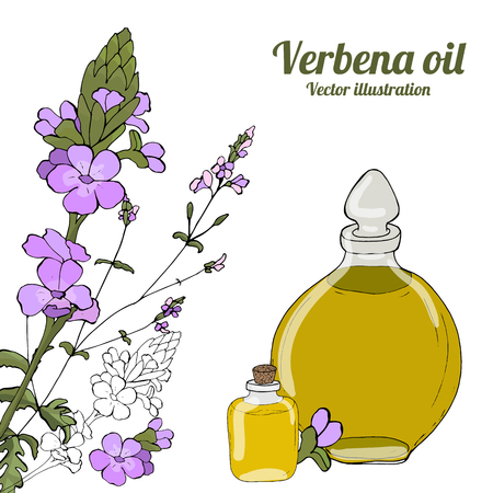 Card, template, banner hand drawing of leaves of vervain oil branches. Verbena oil. Color green graphics, vector illustration.