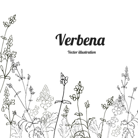Card, template, banner hand drawing of leaves flowers of verbena branches. Color green graphics, vector illustration.