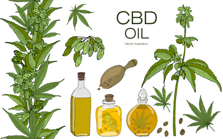 Vector color set of hand drawn hemp elements. Cannabis essential oil.CBD. Oil bottles, branches, leaves, seeds, fruits,  inflorescences. Seamless horizontal border. Ilustração