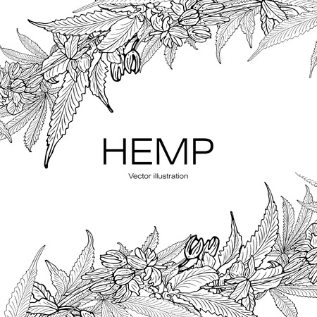 Card, template, banner hand drawing of leaves of hemp cannabis branches. Black and white graphics, vector illustration.