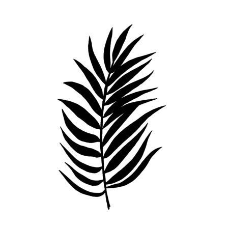 Tropical leaf silhouettes isolated on white background. Chamaedorea. Vector illustration.