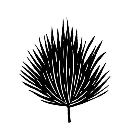 Tropical leaf silhouettes isolated on white background. Vector illustration. Vettoriali