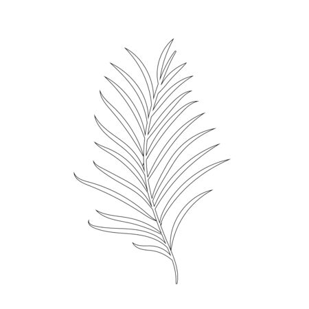 Tropical leaf silhouettes isolated on white background. Chamaedorea. Black outline vector illustration.