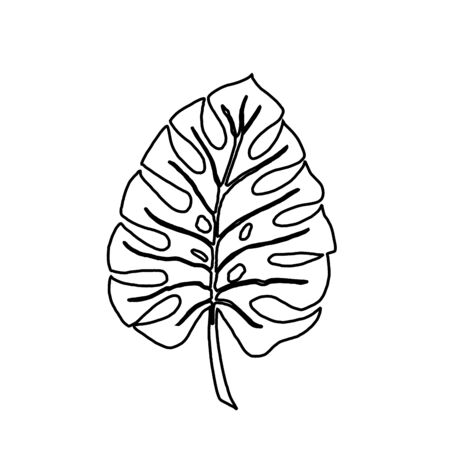 Tropical leaf silhouettes isolated on white background. Monstera. Black outline vector illustration.