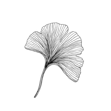 Simple not perfect black ginkgo biloba leaf silhouette. Illustration isolated on white. Hand drawing vector asia sign, symbol. Wabi sabi japanese style. Vettoriali