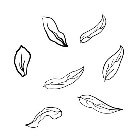 Simple not perfect black silhouette leaves. Icon illustration isolated on white. Hand drawing vector asia sign, symbol.