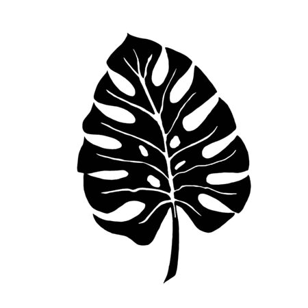Tropical leaf silhouettes isolated on white background. Monstera. Vector illustration.
