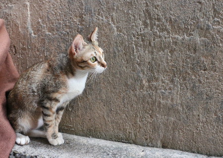 Cat sitting infront of a wall.