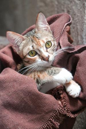 Kitten huddled in a blanket.