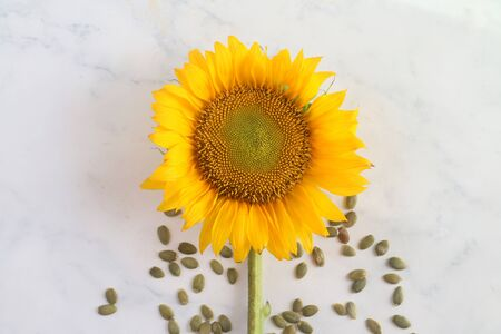 Sunflower and sunflower seeds spread on table