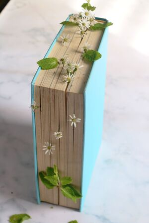 Old hardback book with flowers growing from the pages Stock Photo