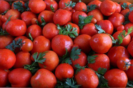 Many fresh red tomatoes closeup