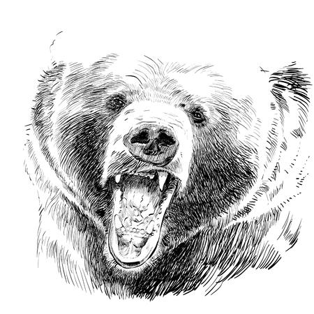 Roaring bear, bear head, wild bear, brown bear head. Vectores