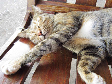 adulation: Sleeping Cat