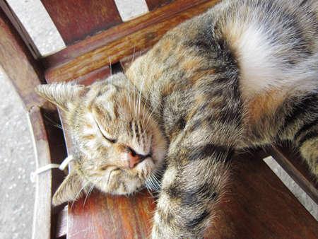 percept: Sleeping Cat Full Face                               Stock Photo