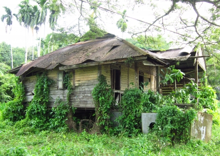 wasteful: Wasteful wooden house in the jungle
