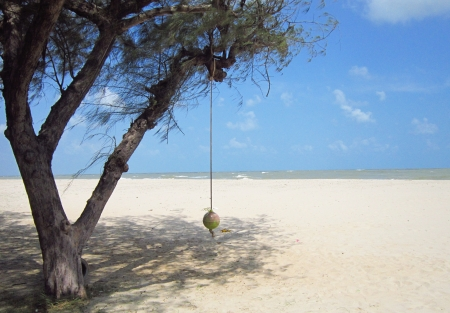 Fixed rope on tree on the beach
